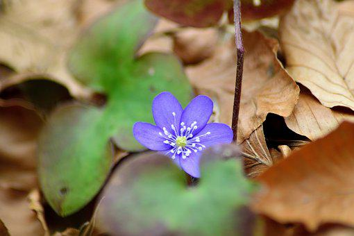 First Of All Liverworts, Spring, March