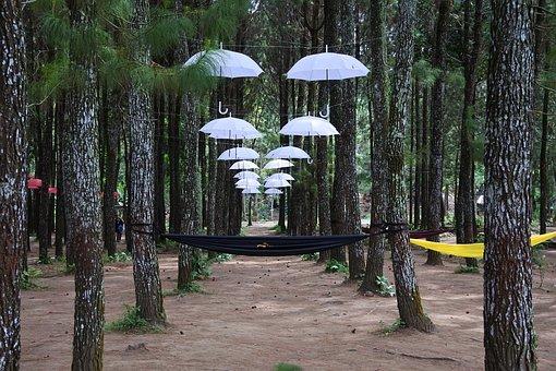 Umbrella, Forest, Rumah Kayu, Sragi, Banyuwangi