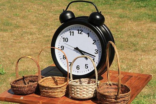 Garden, Collection, Chamomile, Garden Camifolia, Basket