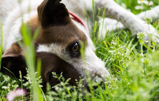 Dog, Garden, Pet, Hair, Nature, Eyes, Animals, Puppy