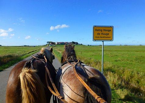 Hallig Hooge, North Sea, Horses, Summer, Nature