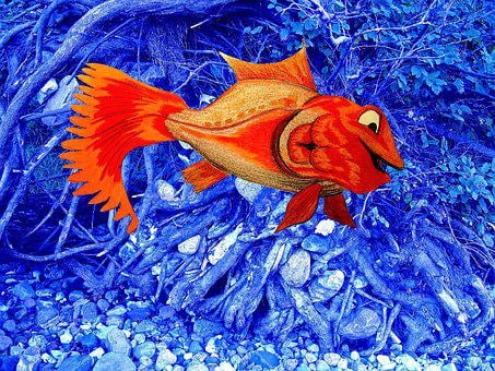 Cute, Fish, Water, Pretty, Positive, Harmless, Colorful