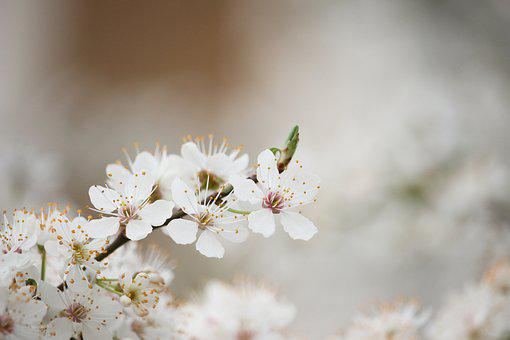 Spring Break, March Madness, Spring Forward