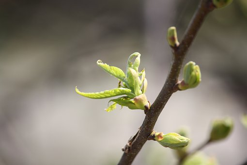 Spring, Bud, Life Force