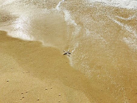 Star, Sea, Beach, Water, Summer, Nature, Ocean, Travel