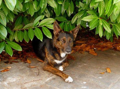 Dog, Diabolic View, Pet, White Paws