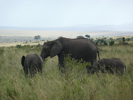 Elephant, Kenya, Masai, Mara, Africa, Wildlife, Nature