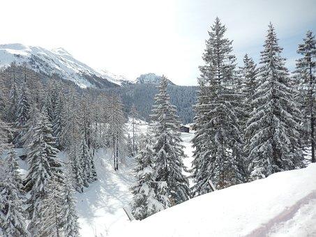 Wintry, Davos, Graubünden