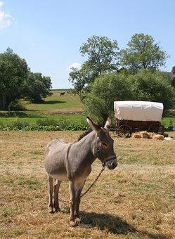 Donkey, Ass, Meadow, Animal World, Mammal, Grass