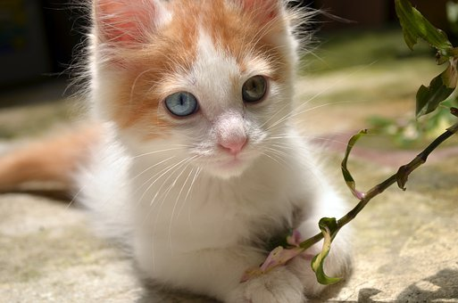 Awesome, Beautiful, Blue Eyes, Cool, Grass, Green