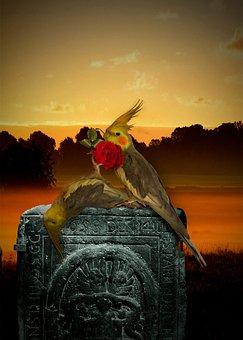 Bird, Death, Died, Cemetery, Shoot, Dead Parakeet, Dead