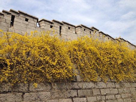 Castle, Forsythia, Namsan