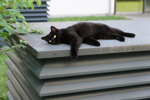 Cat, Black, Animal, Relaxation, Barsik, Superstition
