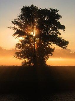 Tree, Sunset, Beautiful, Sky, Clouds, Orange, Red