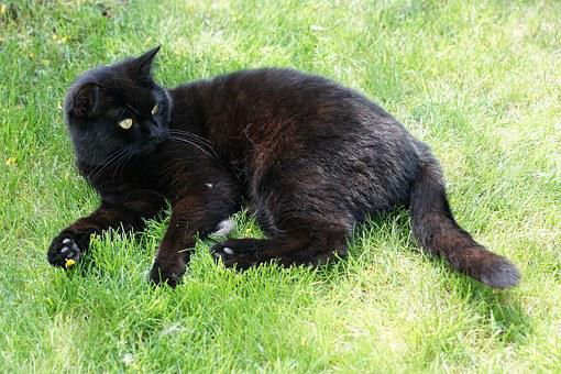 Cat, Black, Animal, Grass, Concerns, Recover