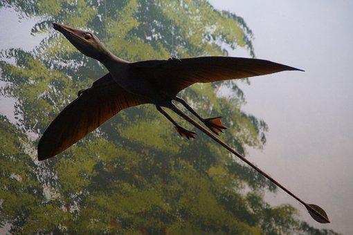 Pterosaur, Replica, Exhibit, Museum Of Natural History