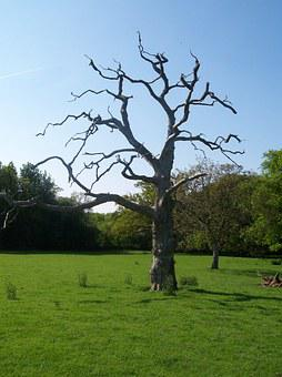 Countryside, North Downs, Kent, Sittingbourne, Tree
