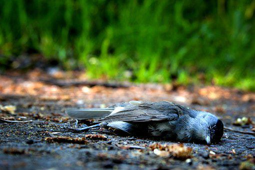 Bird, Death, Die, Pain, Nature, Mourning, Decay, Died