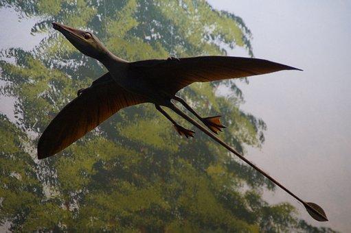 Pterosaur, Replica, Exhibit, Museum Of Natural History
