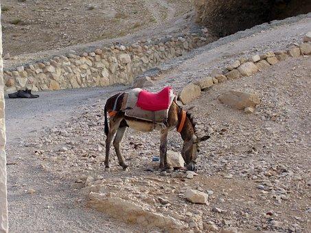 Desert, Ass, Way, Israel, Judah Desert, Waiting, Stop
