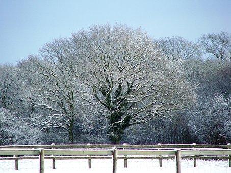 Snow, Tree, Kent, Winter, England, Nature, Field
