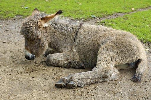 Ass Baby, Zoo, Wildlife Park, Wildlife Photography