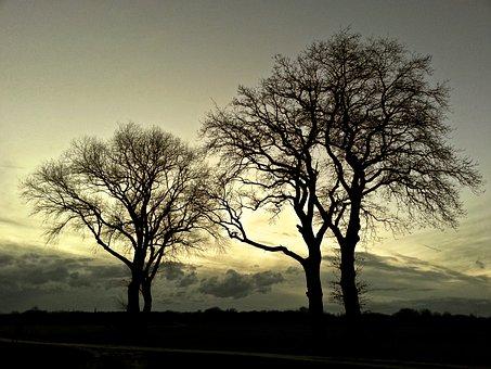 Trees, Light, Forest, Nature, Autumn, Mood, Landscape