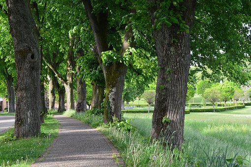 Park, Lindenallee, Trees, Avenue, Promenade