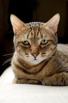Cat, Pet, Gel Reviews