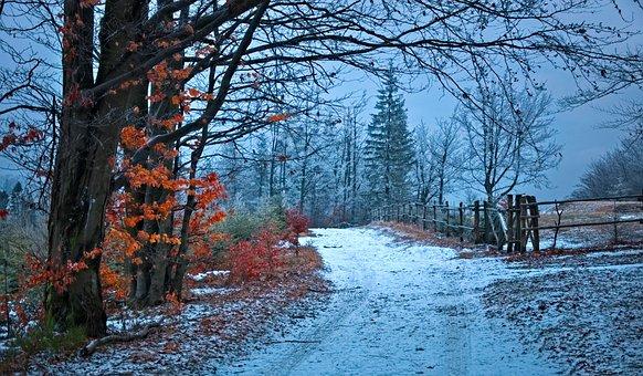Way, Forest, Beskids, Winter, Snow, Landscape, The Path