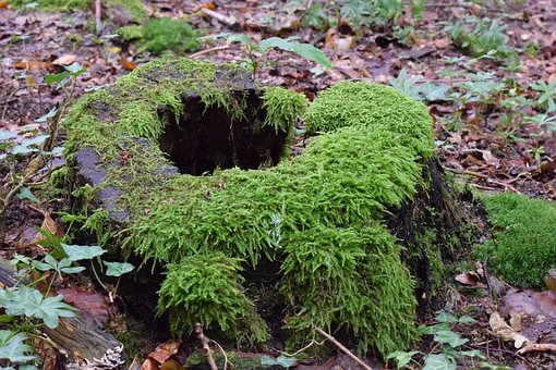 Tree Stump, Moss, Log, Forest, Rot, Old, Nature