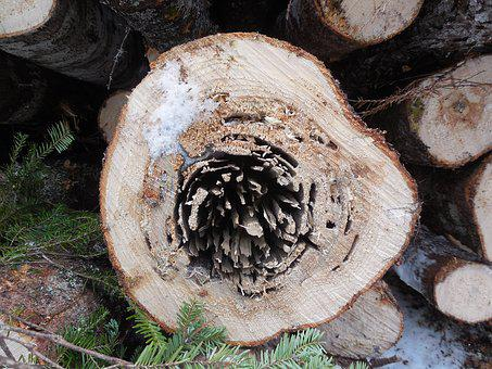 Log, Wood, Tree, Timber, Pattern, Trunk, Grain, Ring