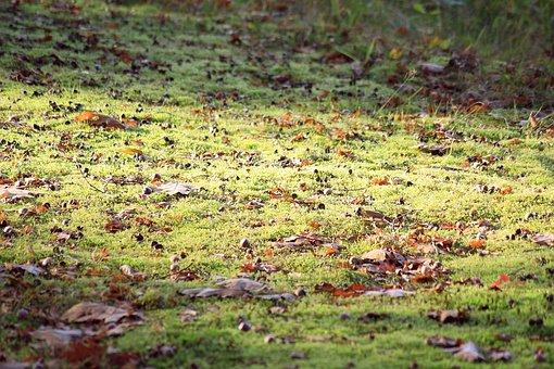 Forest Floor, Sunlight, Green, Nature