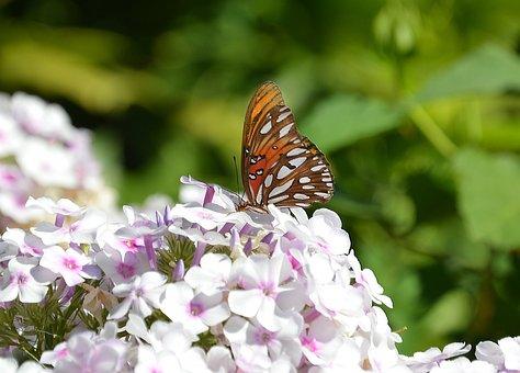 Butterfly, Flowers, Monarch, Summer, Elegance, Natural