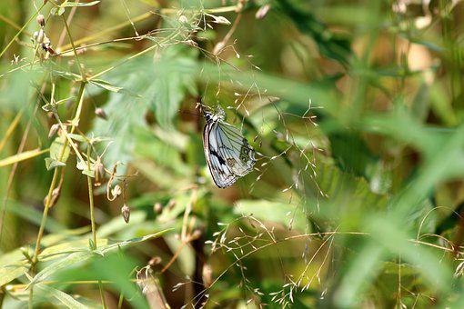 Butterfly, Grass, Summer, Insect, Greens, Nature
