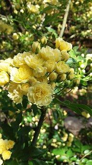 Rose, The Wild, Four Seasons