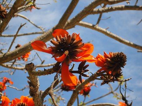 Tree, Flowers, Terra Natura, Benidorm, Corolla, Leaves