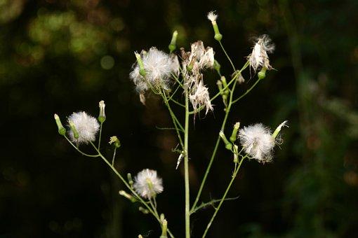 Nature, Wildflower, Outdoor, Flower, Spring, Wild