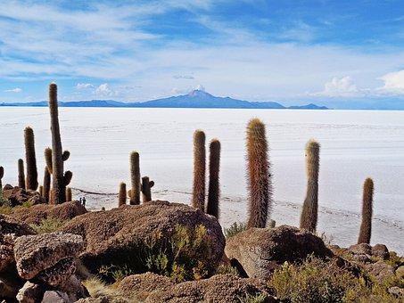 The Salar De Uyuni, Uyuni, Salt Desert, Cacti, Bolivia