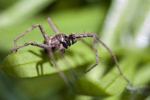 Spider, Macro, Feet, Eye
