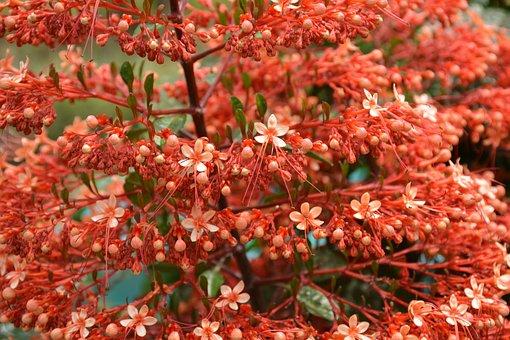 Pagoda Flower, Orange, Flower, Nature, Flora