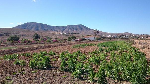 Fuerteventura, Landscape, Rural, Nature, Trail