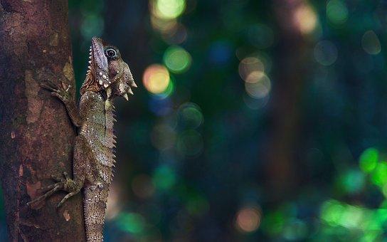 Lizard, Gila, The Animal Saw The Klan, Madagascar