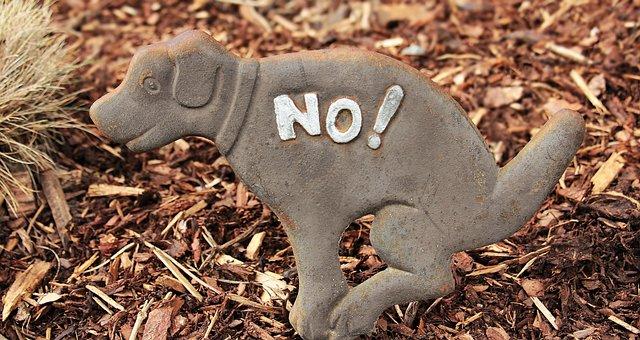 Dog, Note, Sign, Ban, Kot, Bed, Prohibited, Prohibitory