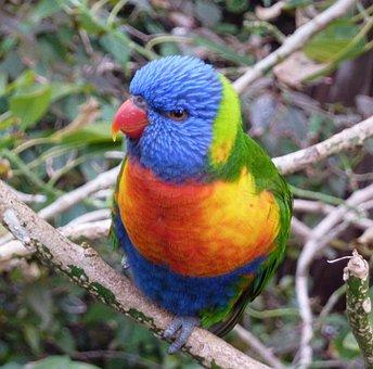 Bird, Colorful, Parrot, Parakeet, Animal World, Birds