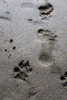 Footprint, Dog, Paw, Animal, Foot, Print, Pet, Nature