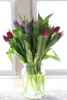 Tulip, Flowers, Plant, Sunlight, Flora, Green, Purple