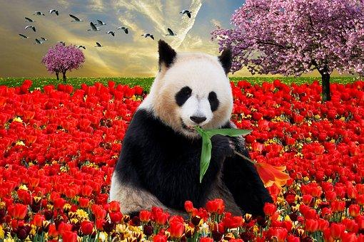 Emotion, Nature, Animal, Spring, Spring Awakening