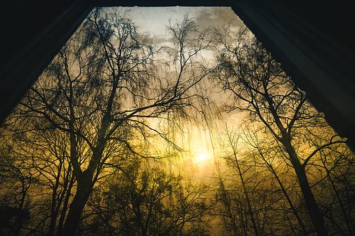 Black, Branches, Dawn, Drama, Dramatic, Fall, Fog