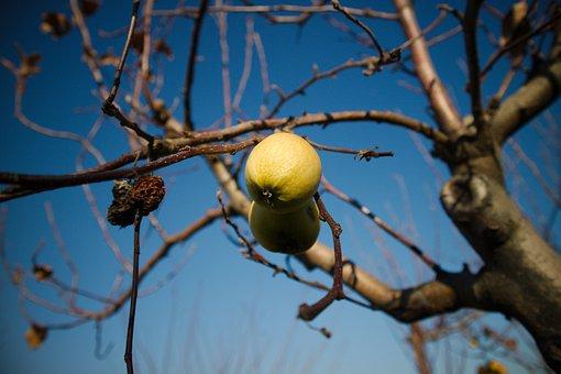 Fruit, Autumn, In The Autumn, Food, Nature, Fruits